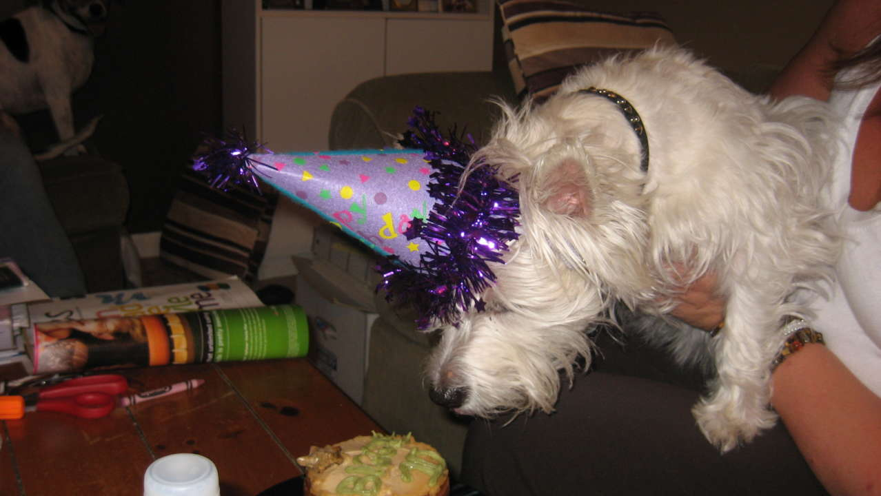 Doggie Parties and More